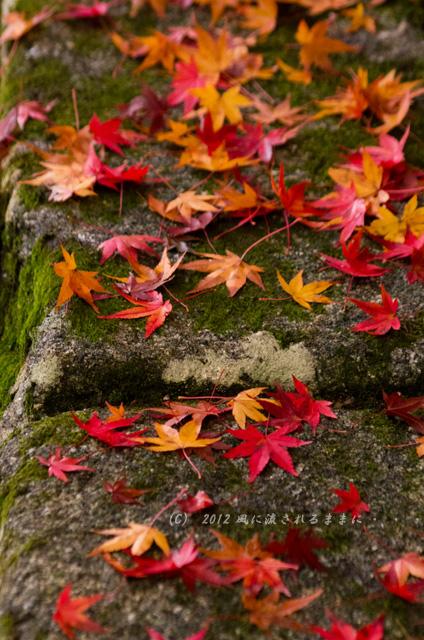京都・曼殊院門跡の紅葉5