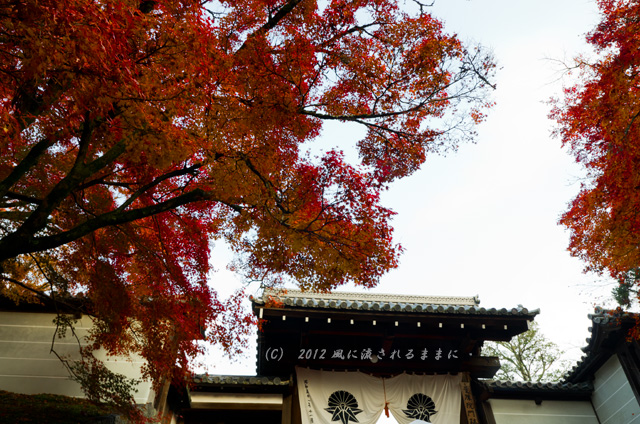 京都・曼殊院門跡の紅葉6