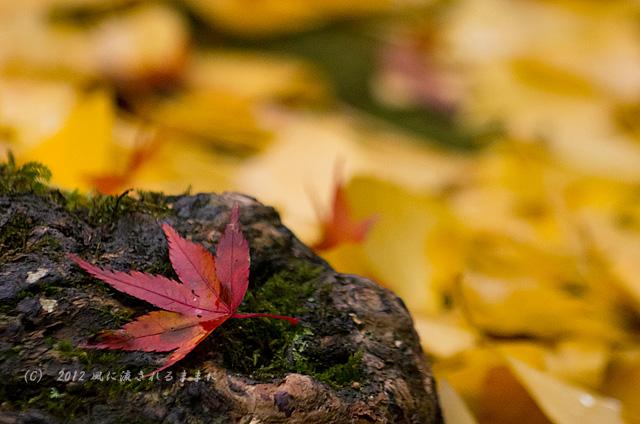 2012年 京都・蓮華寺 紅葉1