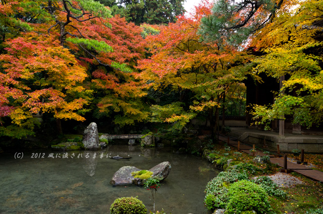 2012年 京都・蓮華寺 紅葉6