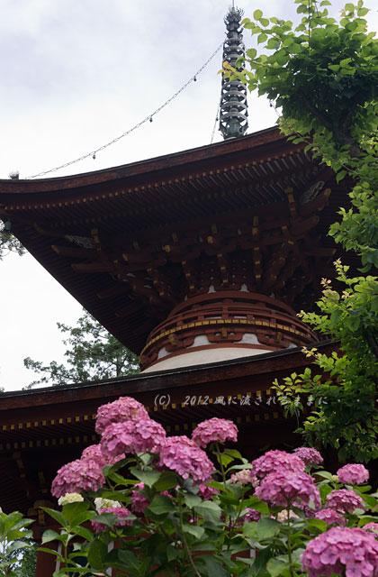 2012年 奈良・久米寺 アジサイ1