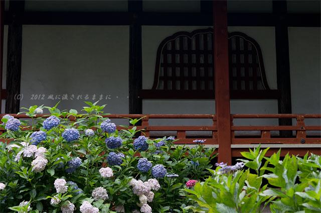 2012年 奈良・久米寺 アジサイ2