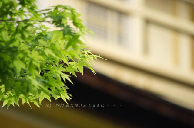 京都・金閣寺5