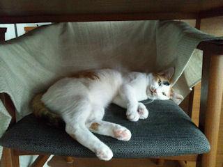 きなこ椅子1