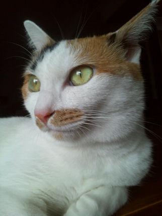 姫クリーム1 (2)