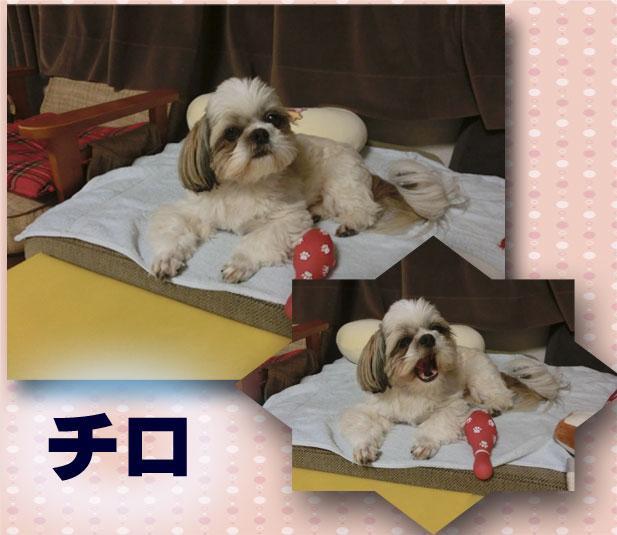 sachi_70b.jpg