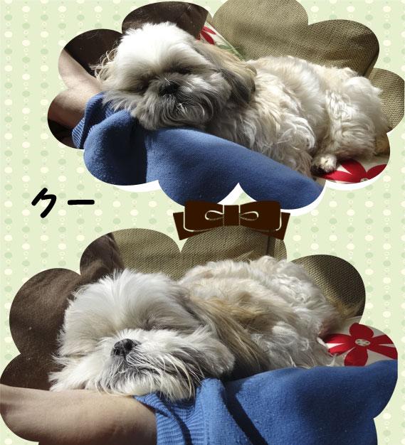 sachi_70c.jpg