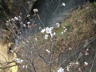 写真 2013-03-23 8 13 01