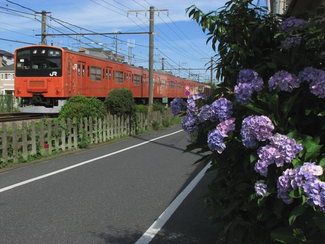 IMG_8822.jpg