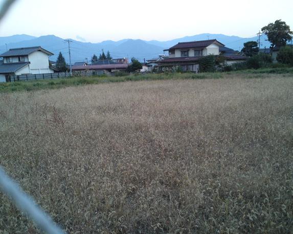 ポスティングの風景・辰巳公園