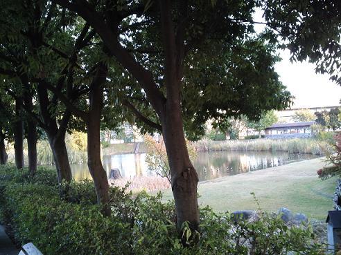 ポスティングの風景・辰巳公園 (3)