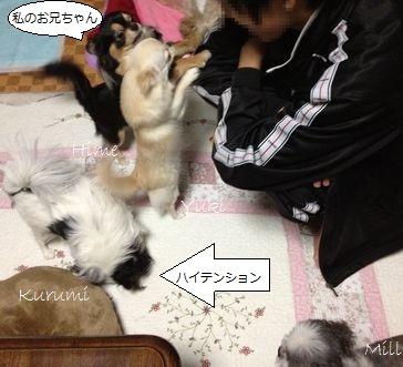 3_20121107162726.jpg
