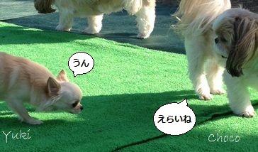 a4_20121112151335.jpg