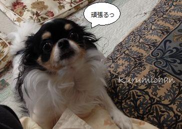 b1_20121019154942.jpg