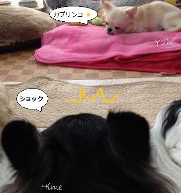 b3_20121109182749.jpg