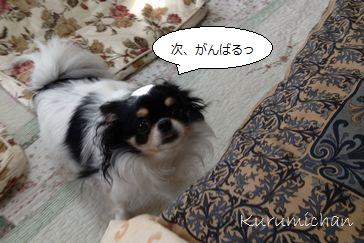b4_20121019154940.jpg