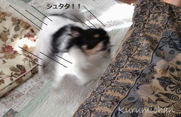 b7_20121019155037.jpg