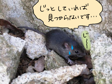 toto-p-137-1.png