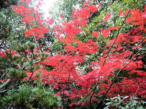 斑鳩神社の紅葉