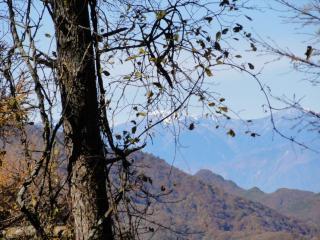 三つ峠登り遠く山