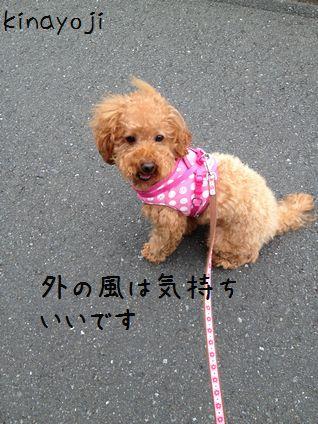 ひさびさお散歩3