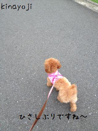 ひさびさお散歩2