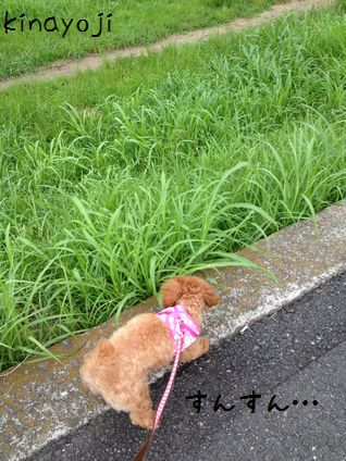 ひさびさお散歩