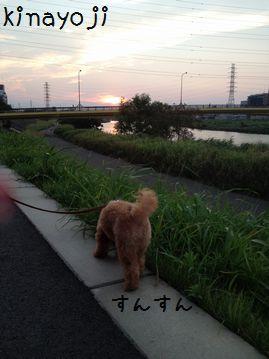 夕日きれい3