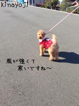 新春お散歩2