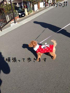 新春お散歩3