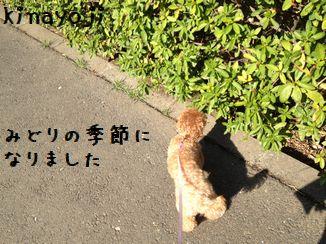公園散歩ラスト4
