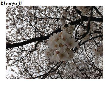花見2013