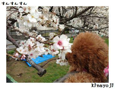 花見2013の3