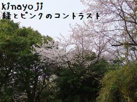 花見にて7