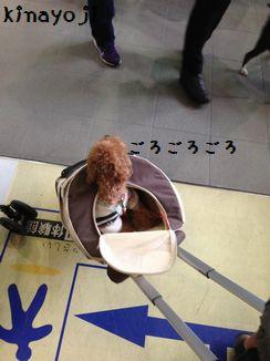 きなさんバッグ10