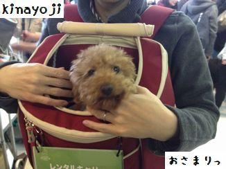 きなさんバッグ2