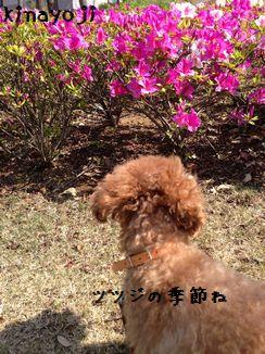 春の陽気4