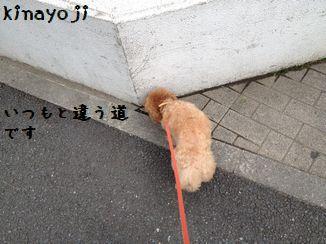 長い散歩3