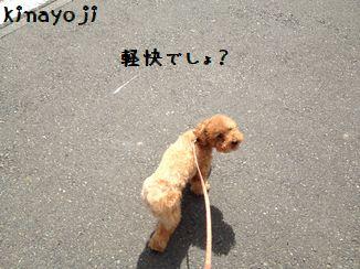 長い散歩2