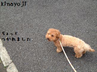 長い散歩4