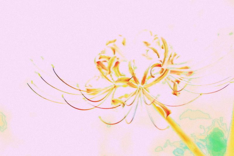 20120929_0510.jpg