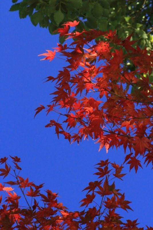 20121125_1167.jpg