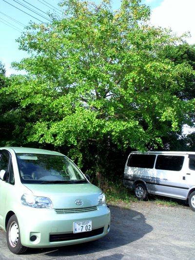 画像ー253 大多喜町・忠勝の像と柳原地区といすみ鉄道 002-2