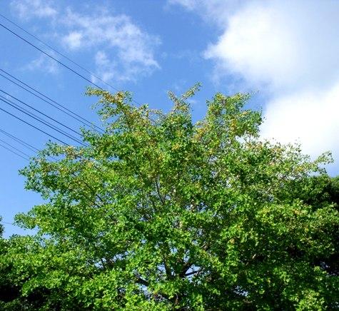 画像ー253 大多喜町・忠勝の像と柳原地区といすみ鉄道 003-2