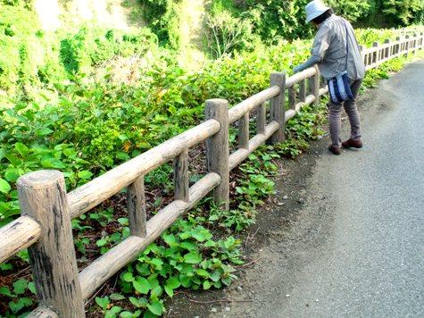 画像ー253 大多喜町・忠勝の像と柳原地区といすみ鉄道 040-2