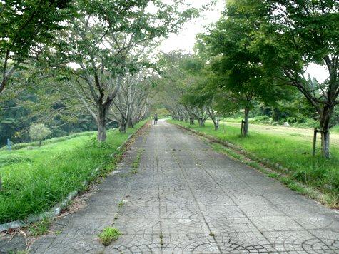 画像ー253 大多喜町・忠勝の像と柳原地区といすみ鉄道 054-2