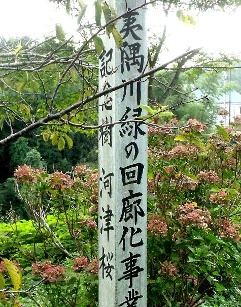 画像ー253 大多喜町・忠勝の像と柳原地区といすみ鉄道 060-3