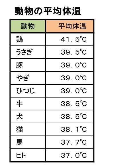 動物の平均体温