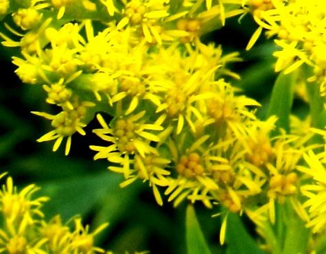画像ー261 花と昆虫 003-2