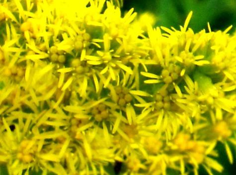 画像ー261 花と昆虫 004-2